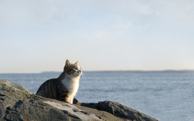 cat-looking-at-the-ocean.jpg