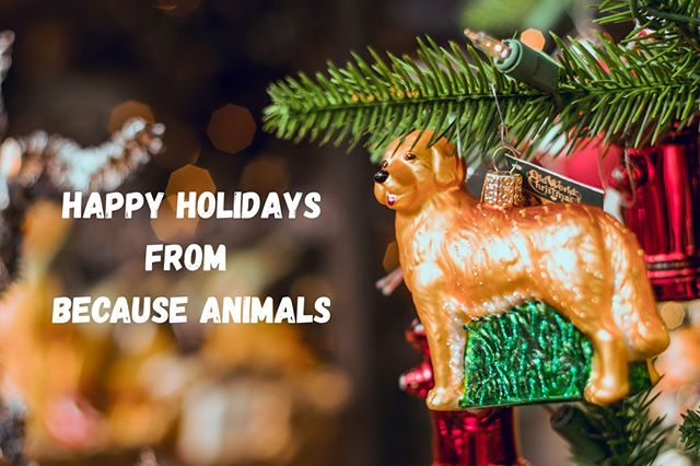 Wishing you and your animals a very joyous holiday season! Take $6 off a supplement order or 25% your entire order with the code JINGLEDOGS at checkout. Only until Christmas!
