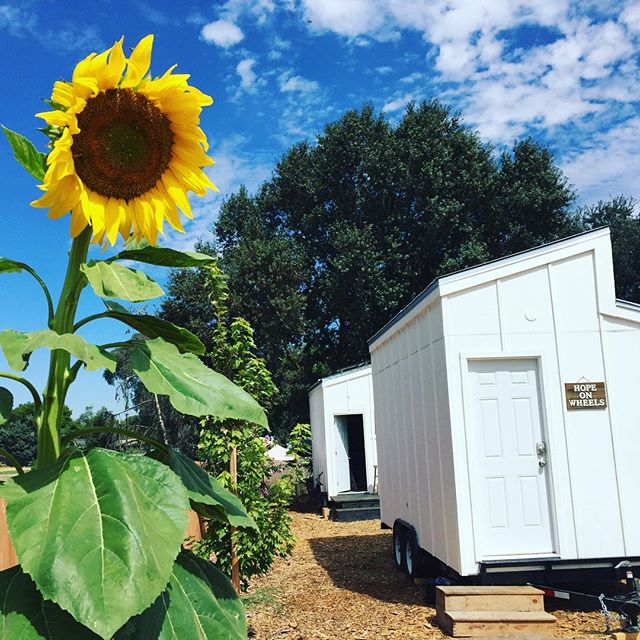 Our sunflower has finally bloomed here at the Village! 😊