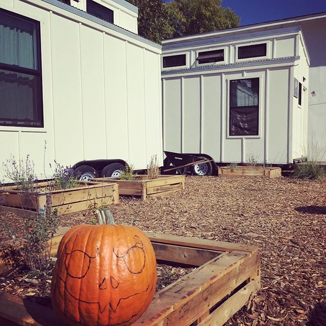 It's beginning to look a lot like fall here at the Village!