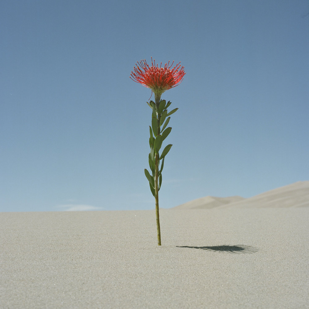 Christina-Arza-Florals-Sand-Dunes-Flowers.jpg