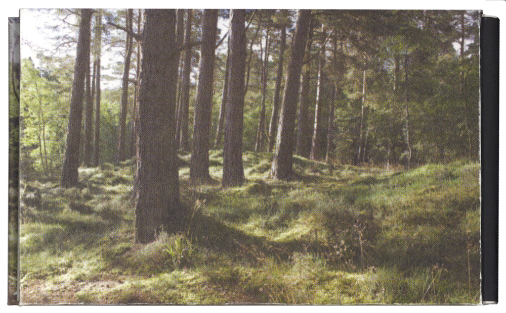 forest_back.png