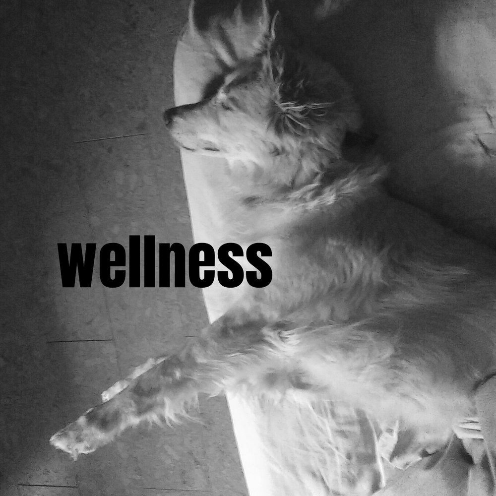 wellness.jpeg
