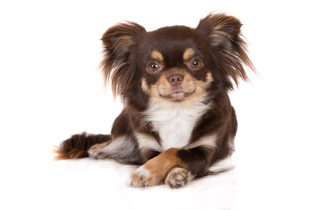 Small Dog Grooming in Bergen County NJ at Fur the Love of Pets in Oradell New Jersey