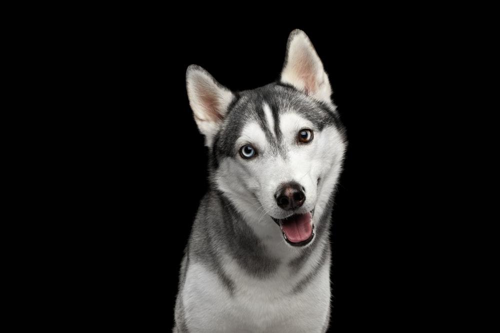 Fur The Love Of Pets Pet Grooming In Oradell Bergen County Nj