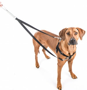 Dog Leashes and Harnesses in Bergen County NJ