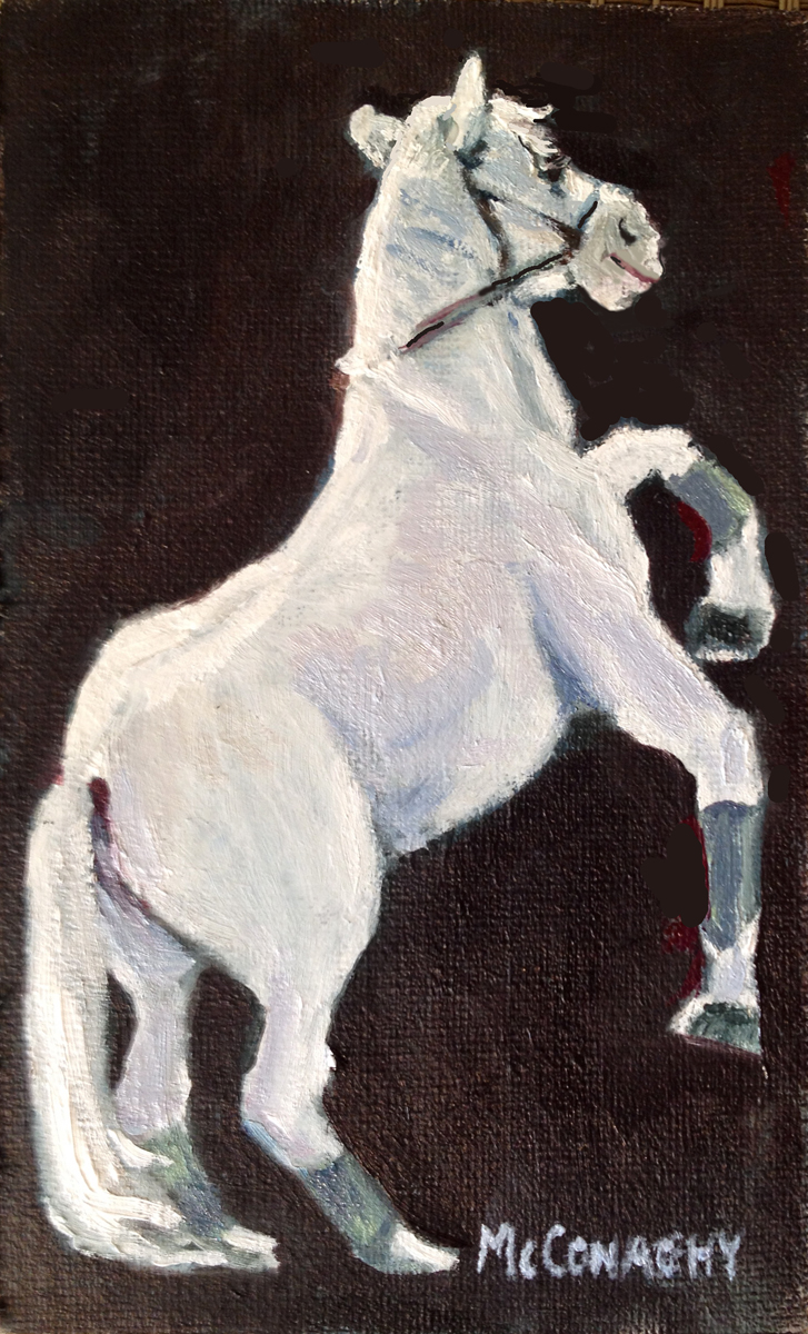 lipizaner stallion-web.jpg