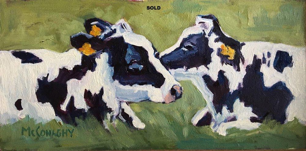3x6facetoface cows.jpg