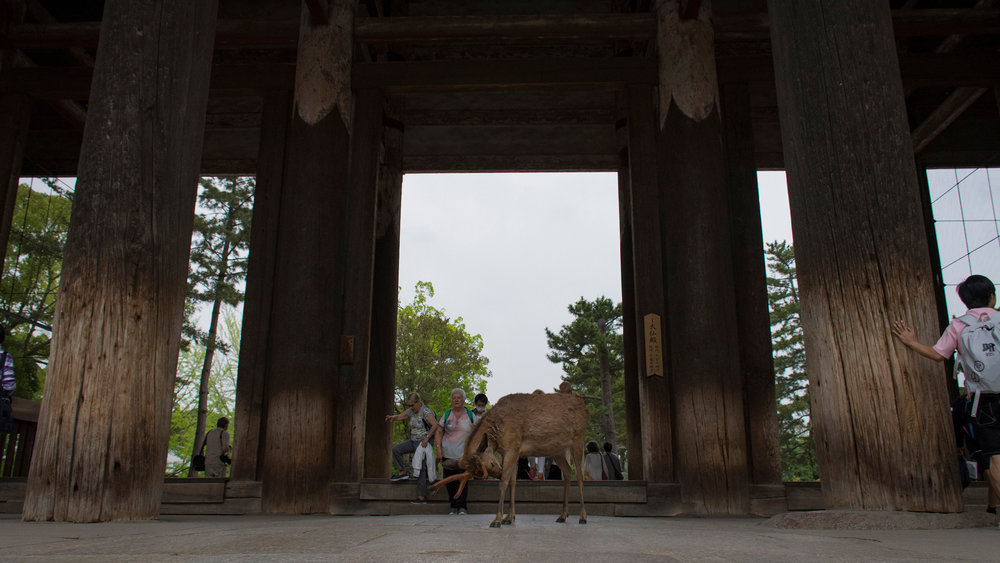 Todai-ji. Nara. The famous wild deer of Nara freely roam the temple (and eat tickets, so, beware..)