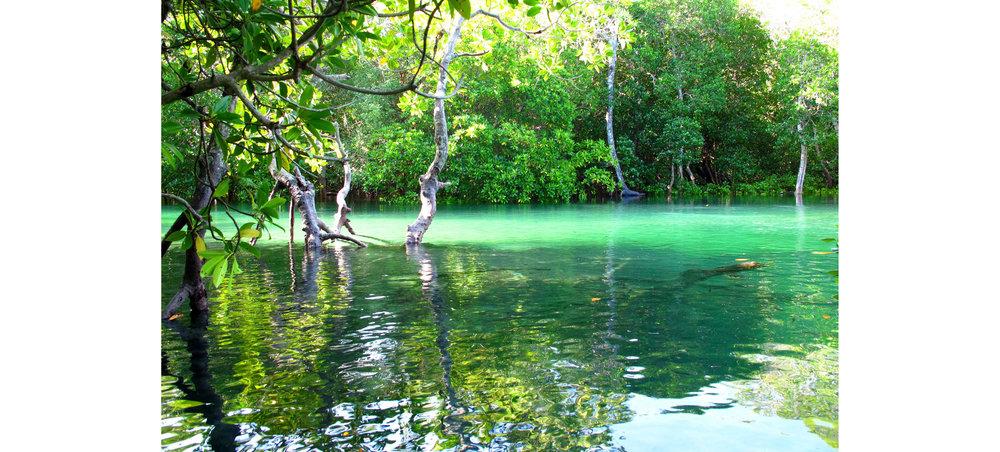 Watamu Mangroves