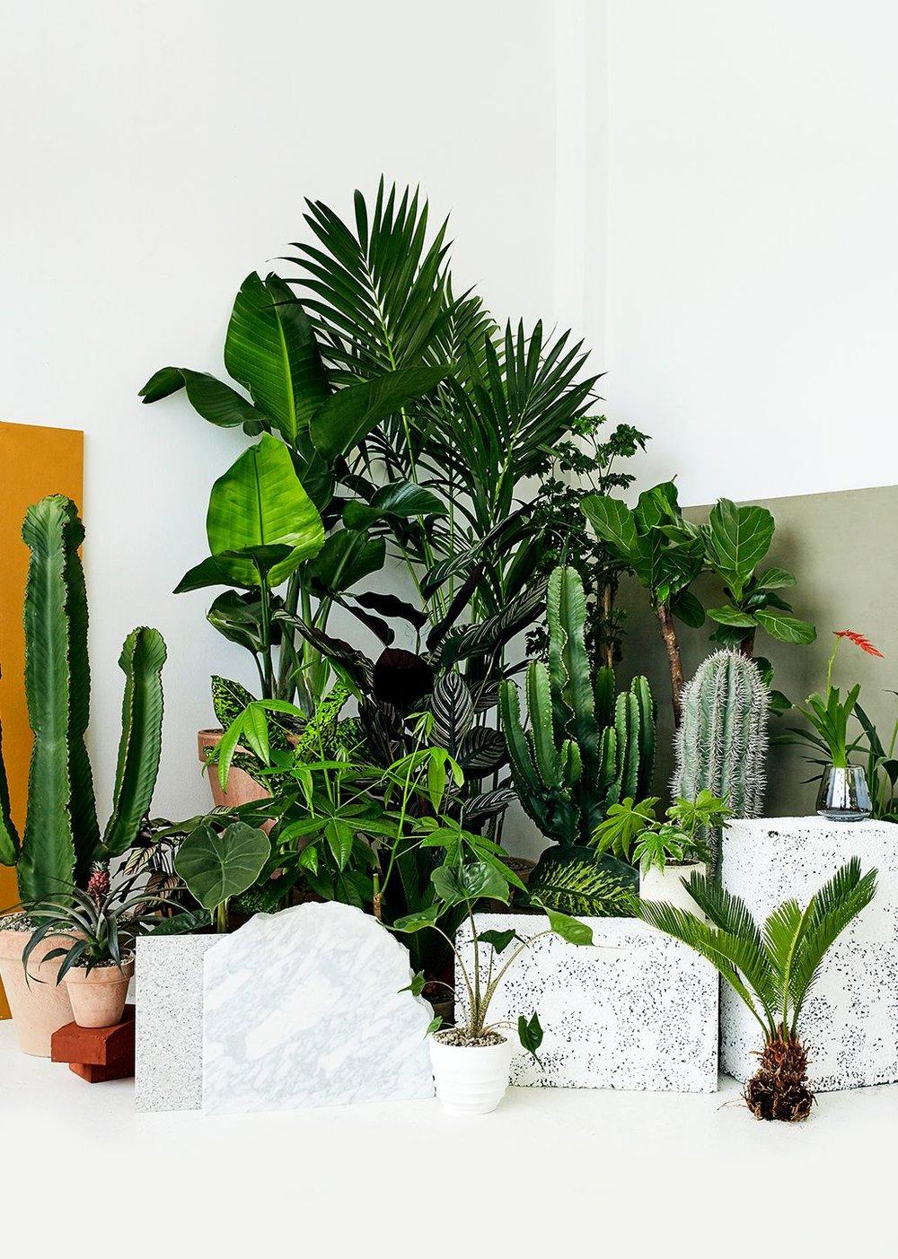 Plantedesign for virksomheder - Vil du gerne skabe en bedre og grønnere atmosfære på arbejdspladsen? Så lad os hjælpe.Uanset om du har en butik, en restaurant eller et kontorlandskab kan vi hjælpe med at udarbejde den helt rigtige indretning med planter, der får det bedste frem i lokalerne og matcher dit brand og budget. Vi giver ærlig og professionel vejledning og laver specialdesignede planteløsninger til jer.