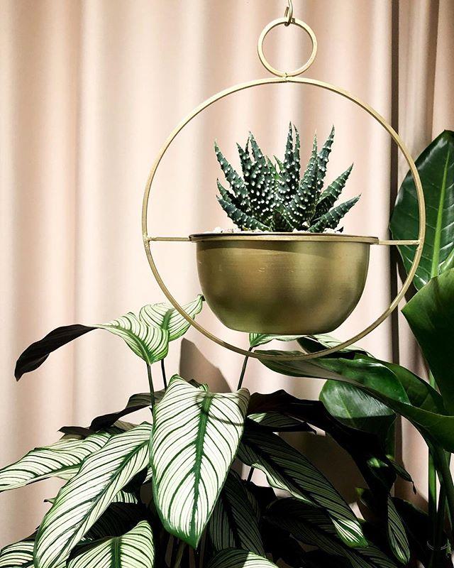 Ny og fin plant-hænger i butikken på Nørrebro👌🏼