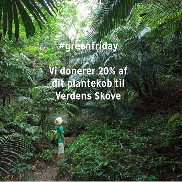 #greenfriday idag fejrer Plant København Green Friday. Det gør vi ved at donere 20 % af alle dagens plantekøb til @verdensskove. Så hvis du fx køber en mini calathea til 45kr så hjælper du @verdensskove med at bevare 21m2 regnskov. Sammen kan vi gøre en forskel 🌱☘️🌴💚🌿🌲🌿