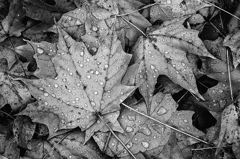 Highbanks121023_0002bw.jpg