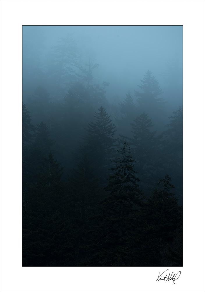 GSMNP-Fog_171105_0019.jpg