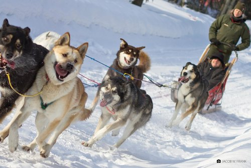 Explore the valley on a dogsled