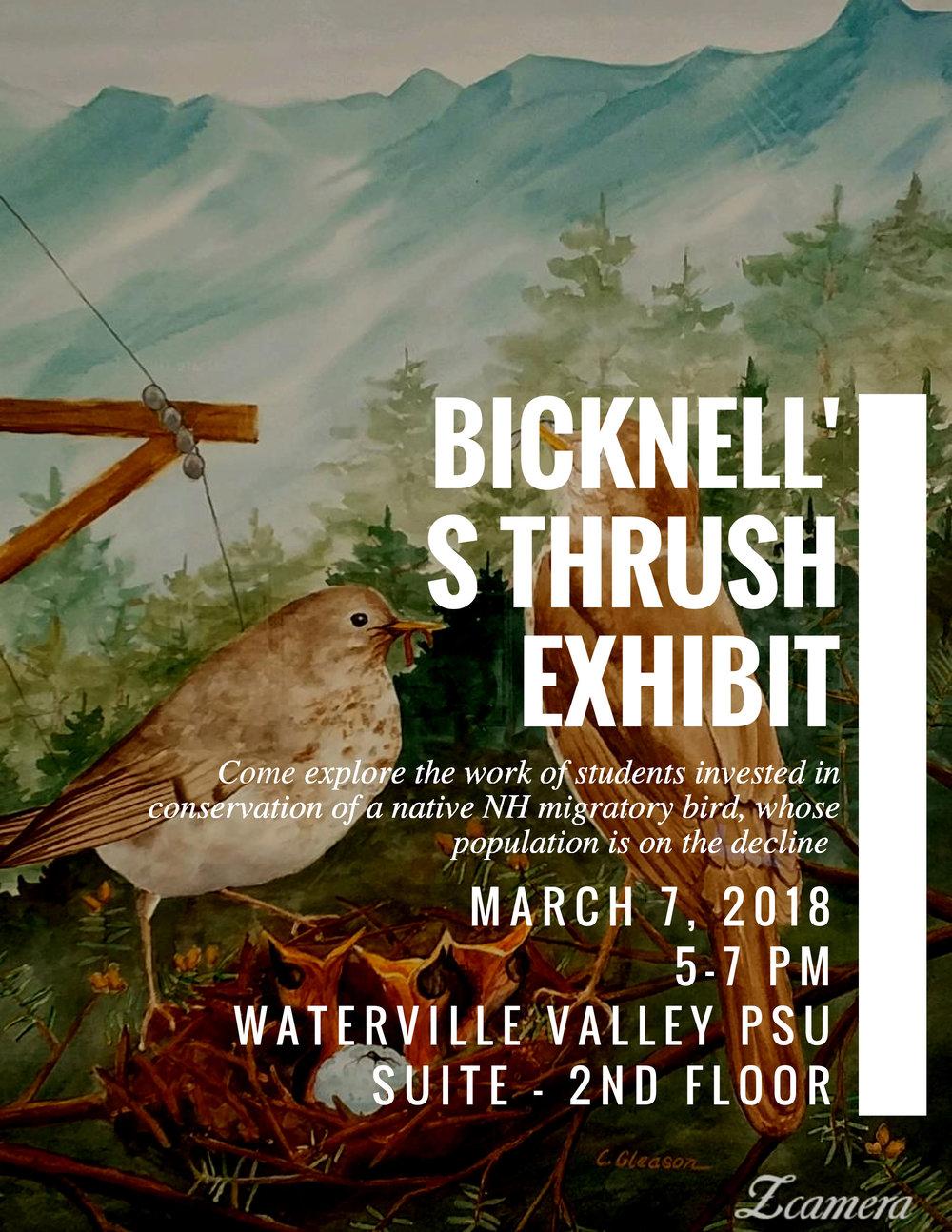 Bicknell's-Thrush.jpg