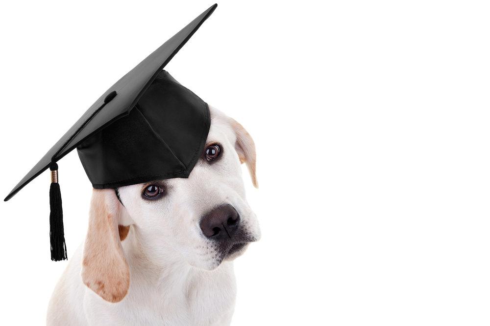 Grad Dog.jpg