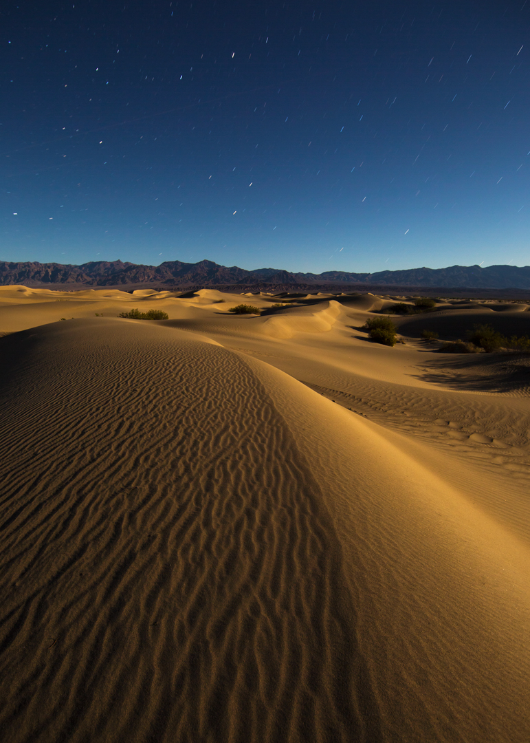 Lunar Mesquite Landscape_5x7.jpg