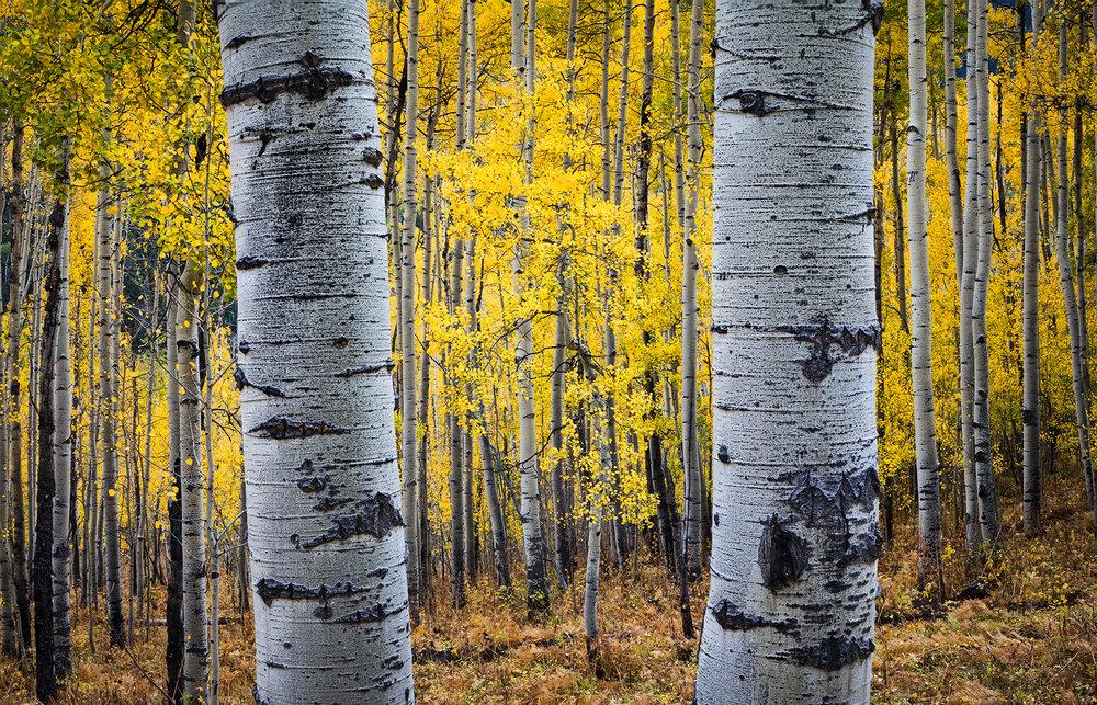 Owl Creek Forest Frame Hor.jpg