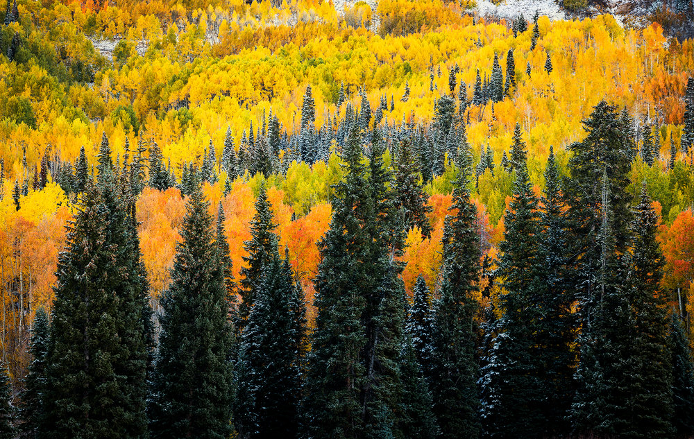 Washington Gulch Autumn Ridge.jpg