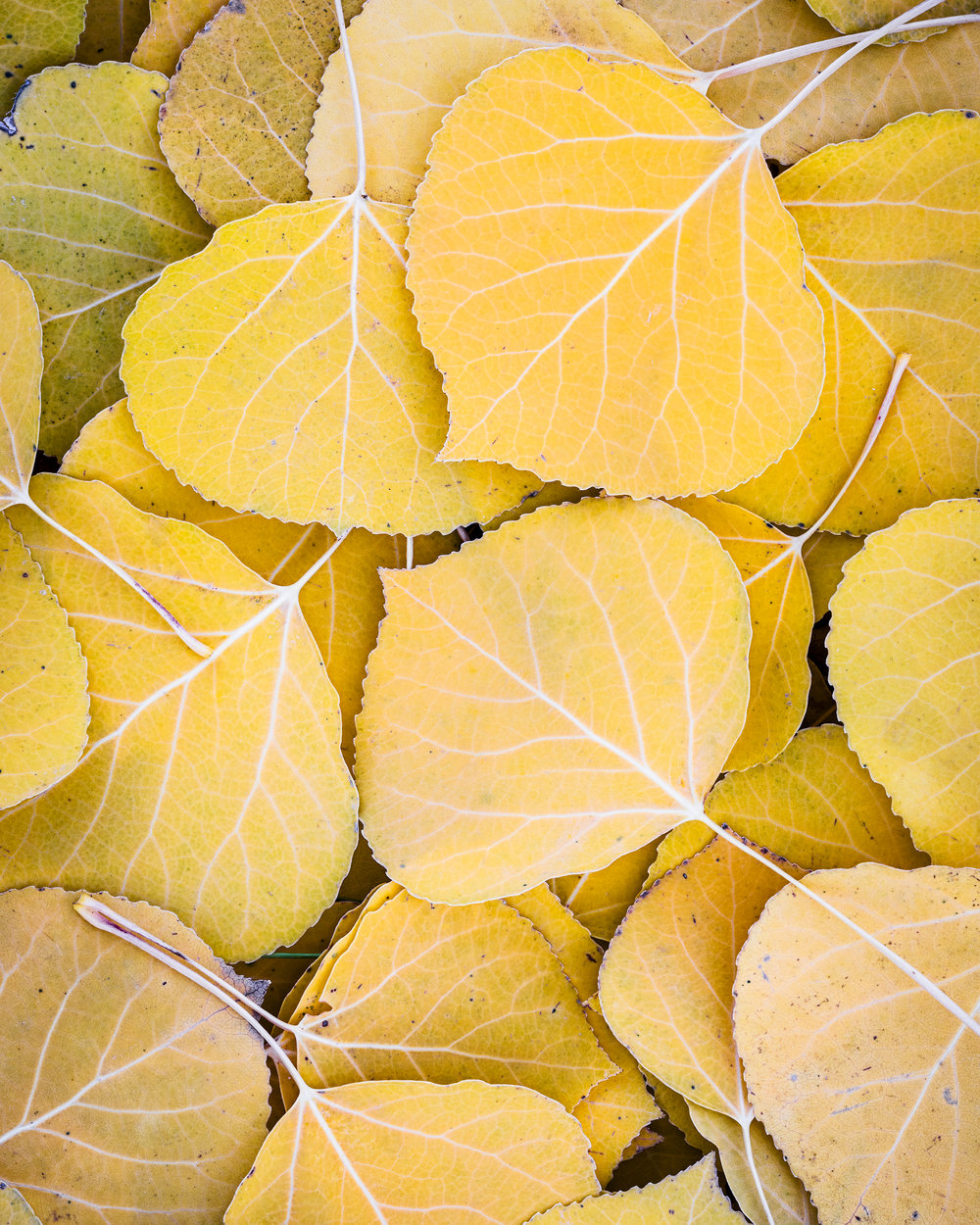 Aspen Carpet_8x10.jpg