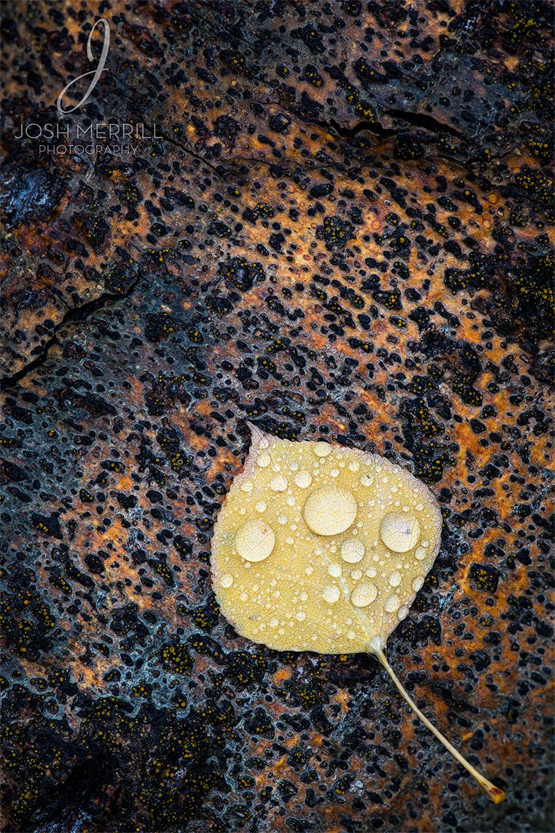 Jasper Autumn Textures_Ig.jpg