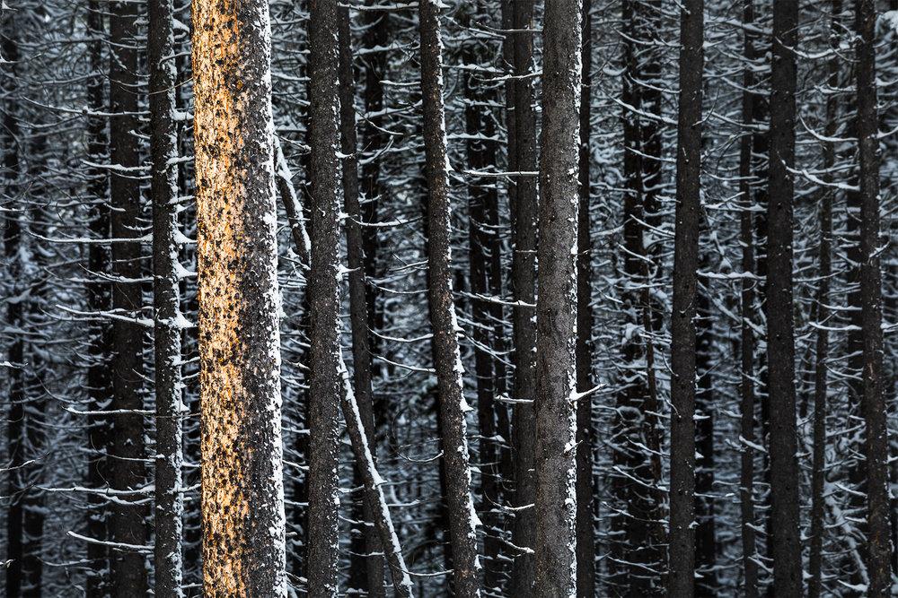 Jasper Burn Snow.jpg