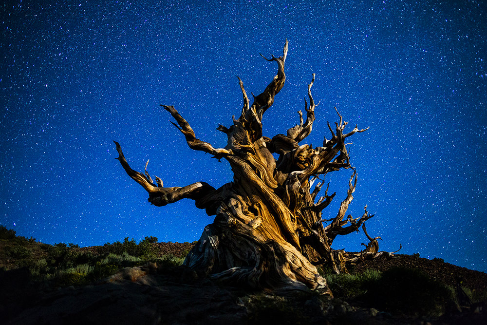 Bristlecone NIght_IG.jpg
