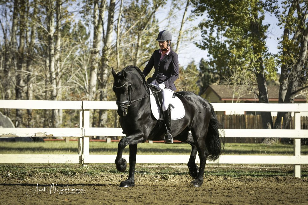 Friesian with Marieke.jpg