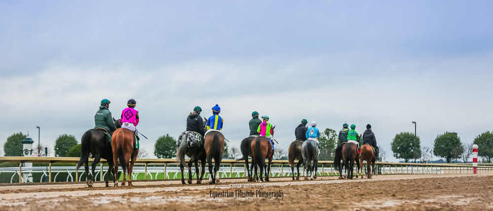 Keeneland race horses going to the start line