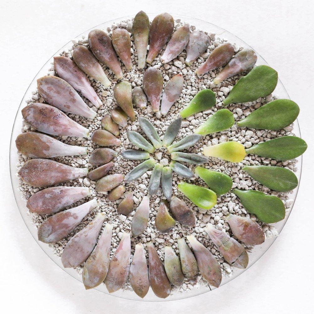 propagation tray with pumice ^