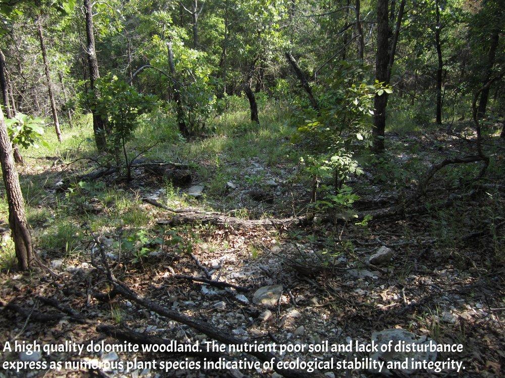 Ava woodland.JPG