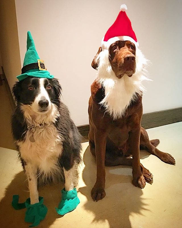Hank and Lady are ready for Christmas. Hours for the holidays: This weekend: normal hours Christmas Eve: 11-1 Christmas Day: closed  12/26-12/30: OPEN 11-5 New Years Eve: 11-1 New Year's Day: Closed  Come hang out with us in the tasting room!