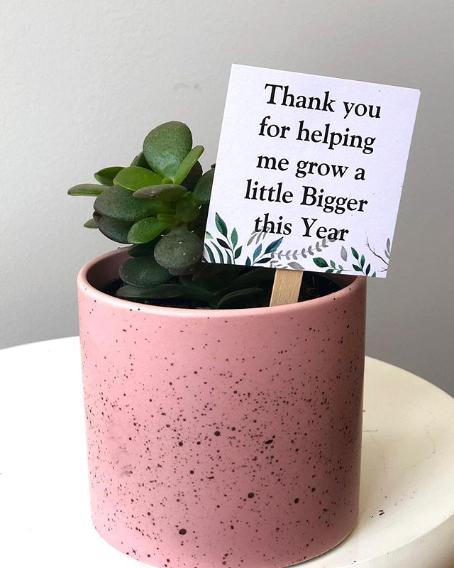 A small number of succulents left but peperomia still available for these sweet gift pots. We can add this little sign for teachers or care givers too! 🌿🌱🎄 . . . . . #plantlover #plants #plantstagram #planthoarder #iloveplants #indoorjungle #homedecor #plantlife #pausewithplants #melbournegifts #interiorinspo #melbourneplants #melbourneplantclub  #buddingvineco #plantstyling #instaplants #houseplants #plantgang #botanical #indoorgreen #homestyle #interiorstyling #greenyourfeed