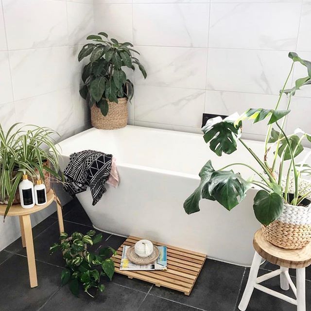 Who loves plants in their bathroom? They loving being there! The humidity and a little bit of light is usually the perfect environment for many indoor plants. Plus they look so pretty 🌿 . . . . Styling & image by @scandilane_  We are over here having an extended lil holiday before really getting back into the swing of things at Budding Vine. You can make orders online but there will be no deliveries until February 14th as we are having a little Bali getaway. 🌱🌿🌺 . . . . #plantlover #plants #plantstagram #planthoarder #iloveplants #indoorjungle #homedecor #plantlife #pausewithplants #melbournegifts #interiorinspo #melbourneplants #melbourneplantclub  #buddingvineco #plantstyling #instaplants #houseplants #plantgang #botanical #indoorgreen #homestyle #interiorstyling #greenyourfeed