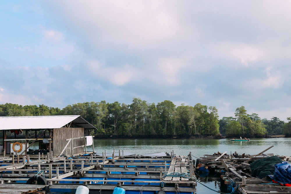 OnHand Agrarian operates on farm plot FC112E, off the northeast coast of Singapore, and sits in front of Pulau Ketam and Pulau Ubin. In the background, other local farmers are lowering their lines into the water.