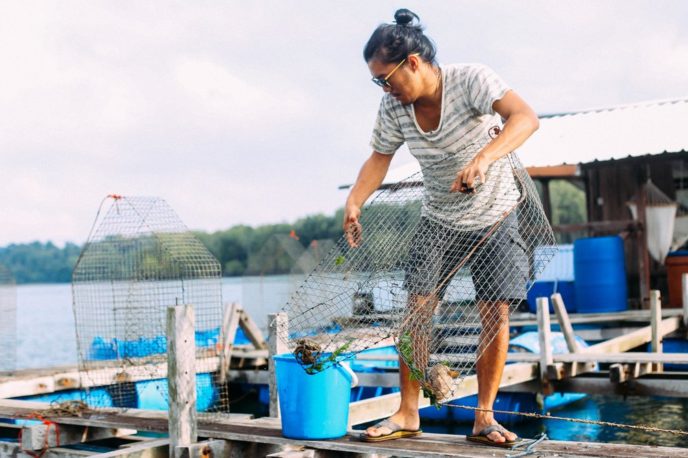 """OnHand rears locally-caught fish, which they trap in traditional wire cages, or """" bubus """"."""