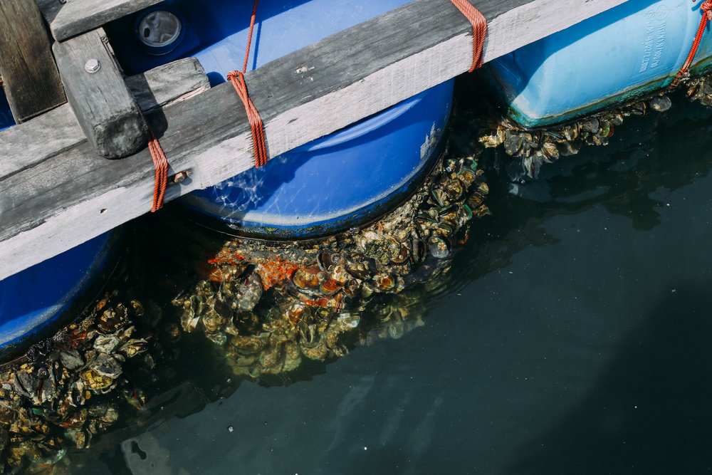"Integrating ""cleaners"" such as mussels into their operations has removed the need for expensive oxygen and filtration equipment, thus saving on electricity bills, and at the same time, keeps the aquatic environment hygienic."