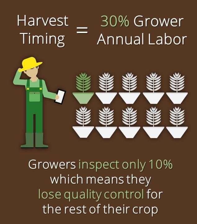 Annual_Labor.jpg