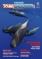 Ocean Artists Society p. 96