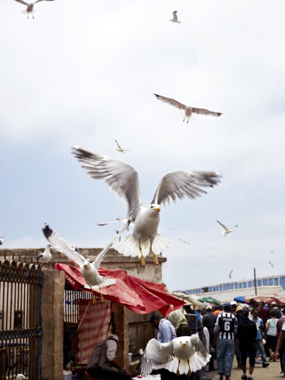 Fishmarket_Seagull.jpg