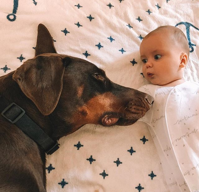 Big dog, little baby! 🐕 👶🏻 (or a big baby and a little dawg)  #doberman