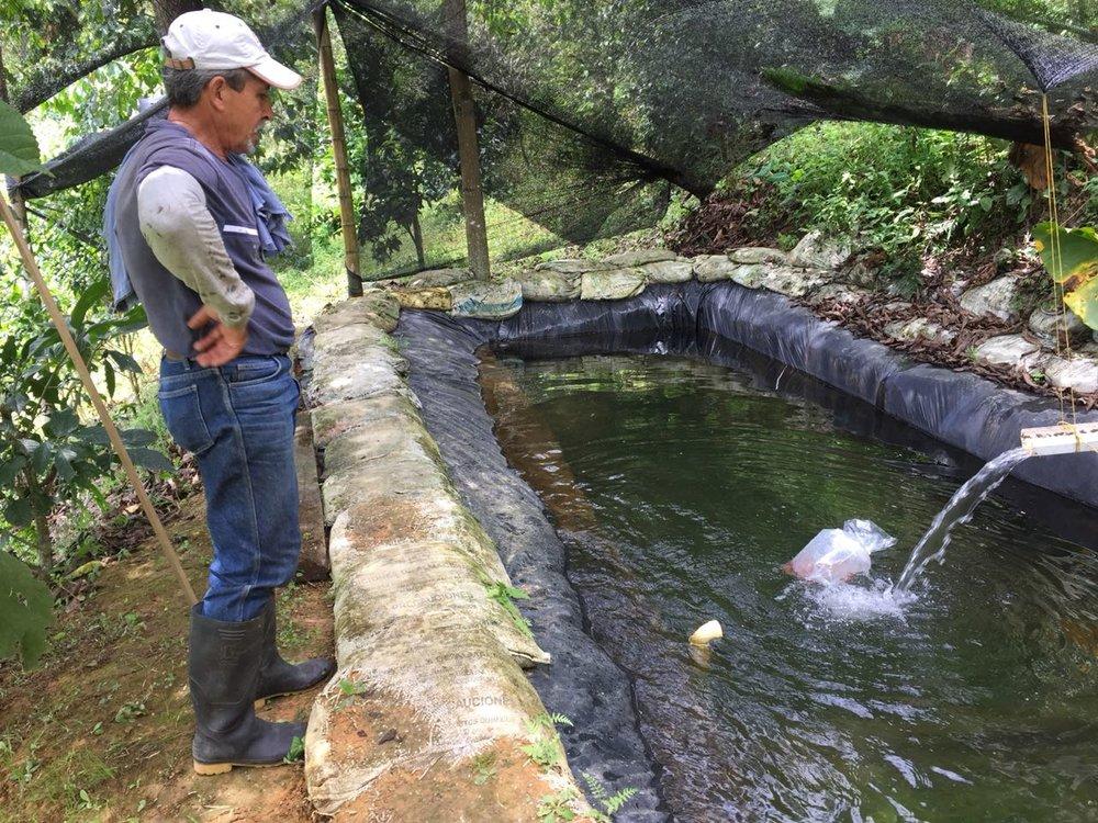 Fish Pond 4.JPG