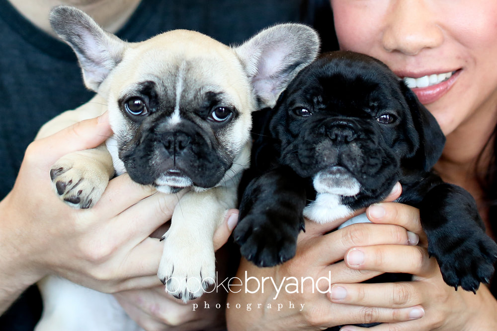 Brooke-Bryand-Photography-San-Francisco-Pet-Photographer-IMG_0043.jpg