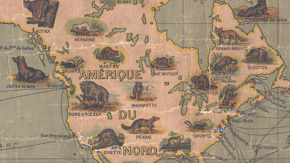 A Map of the World's Mammals for People Who Liked to Wear Them   Atlas Obscura  BY JESSICA LEIGH HESTER