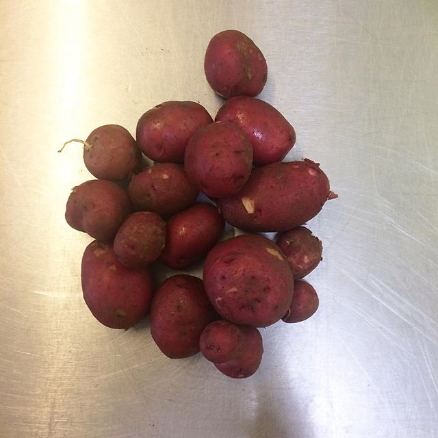 Tiny red Colorado Rose  potatoes outta @roots_organic_farm along with that steak I mention from an earlier post is how ya #eatlikeafarmer.  You grow a mean spud Jacob! Want in our Local Produce/Local Product weekly subscription?  Sign up with link in the bio. $24 a week.