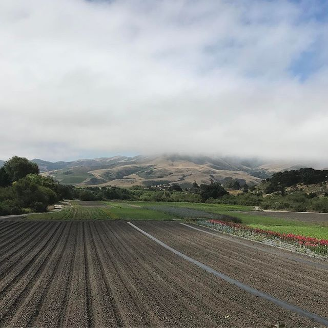 To our subscribers; The items you're are going to receive tomorrow came up from this dirt this morning which is approx 20 miles away from your table.  Subscribe now with Neighbor Tim's Farms so you have access to this nutrient rich and flavor packed produce. $24 a week. Link in the bio.