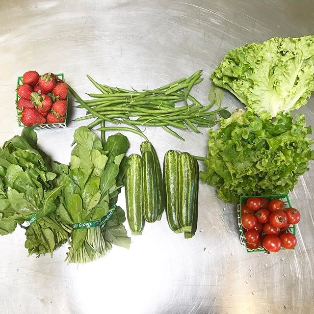 Oh man are we smitten over this weeks crop!  Exclusively all items are from @sunriseorganicfarm cherries tomatoes just like how they were when I was a kid on the farm in South Dakota. The green beans are killer and this arugula will be spicin up all your salads or steaks.  Zucchini comes with stripes this week too. Which is super fun!
