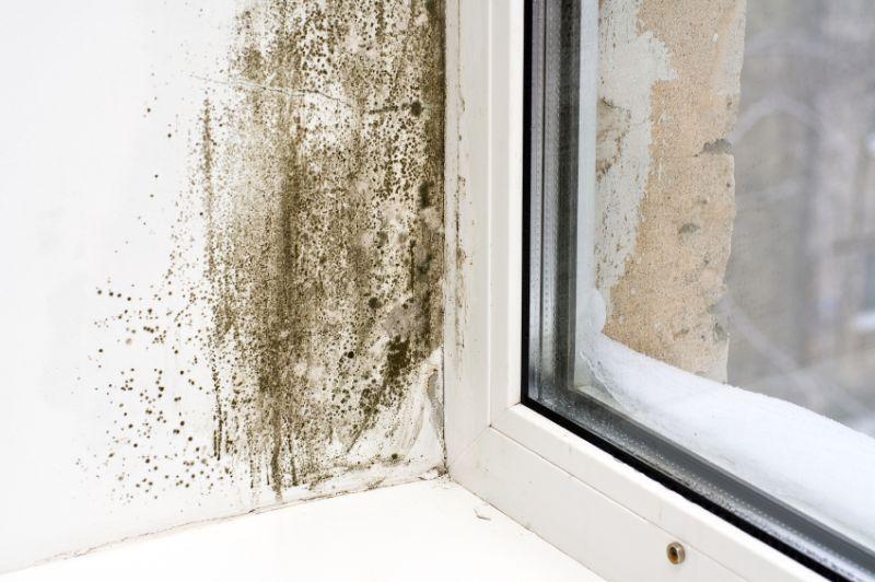 mold-removal.jpg
